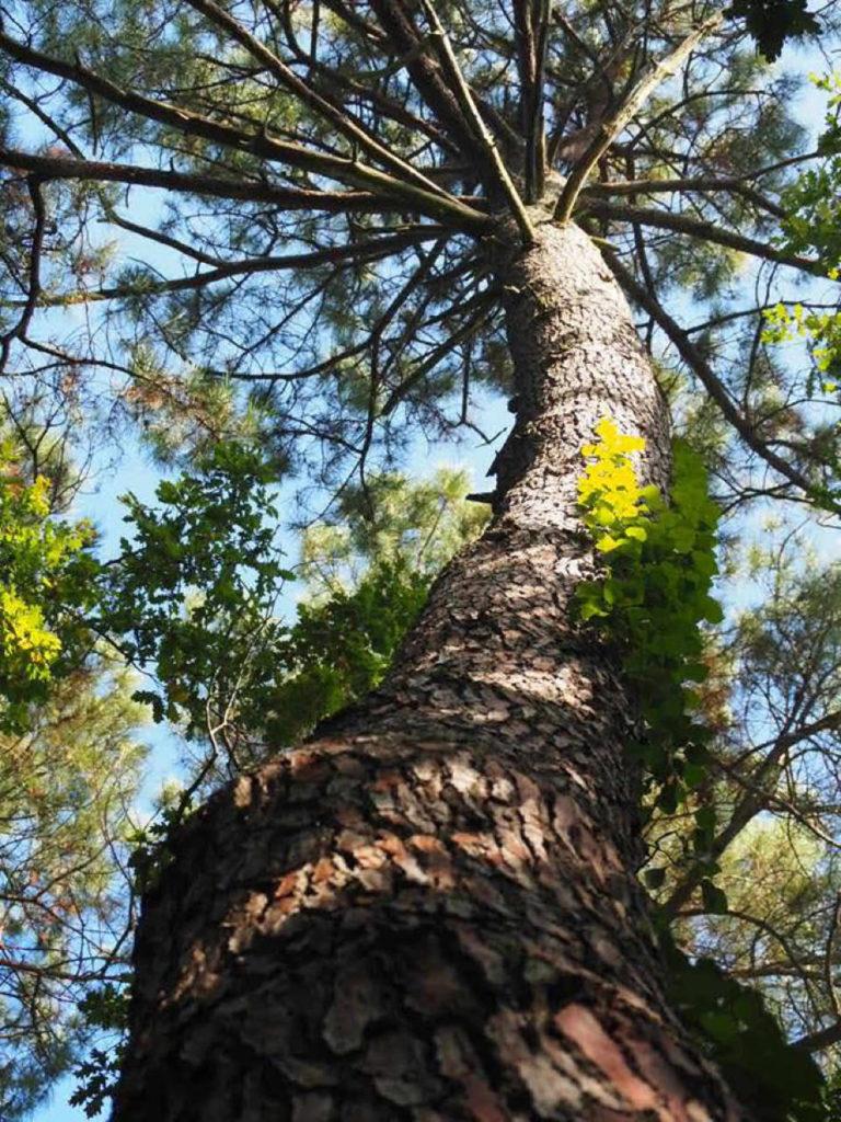 arbre et moi - bain de foret christine sanchez