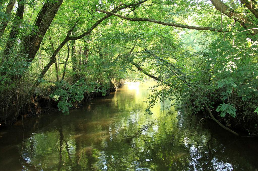 parc naturel régional des Landes de Gascogne - La Leyre