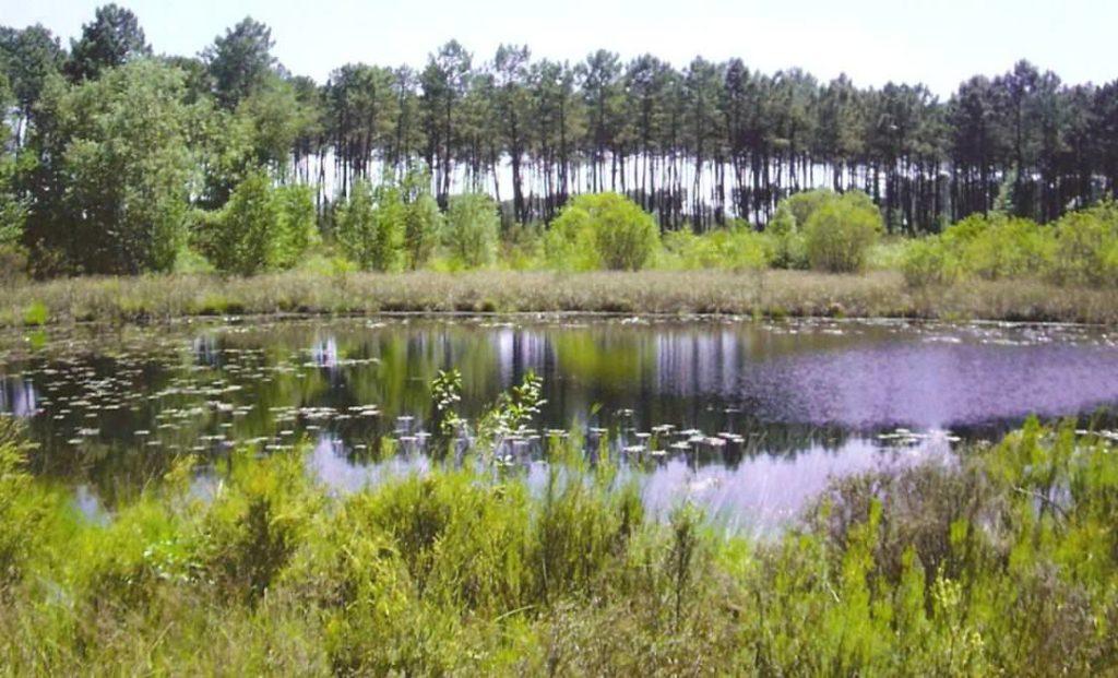parc naturel régional des Landes de Gascogne - lagunes