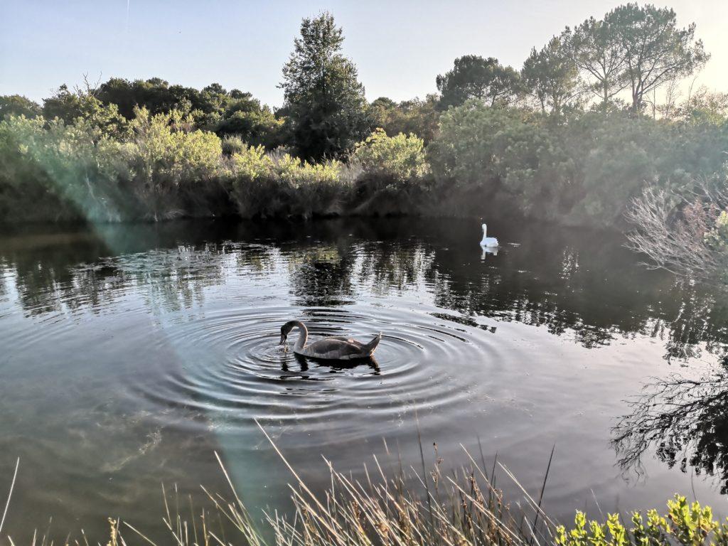 Le Teich commune engagée